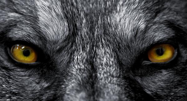 Beware of Big Bad Wolf Marketing Companies