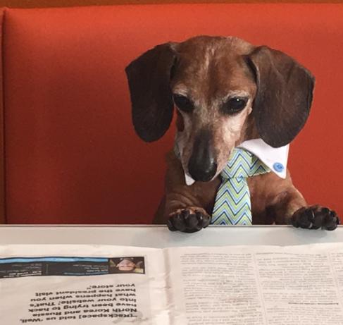 Dachshund-in-Necktie-Reading-Newspaper-